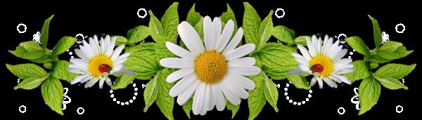 """Résultat de recherche d'images pour """"barre de séparation plantes"""""""