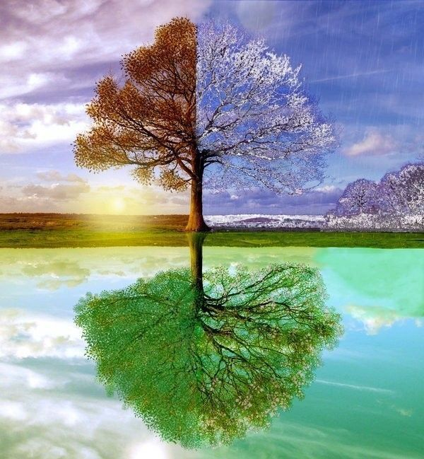 Exceptionnel arbres dessins gifs peintures MR16