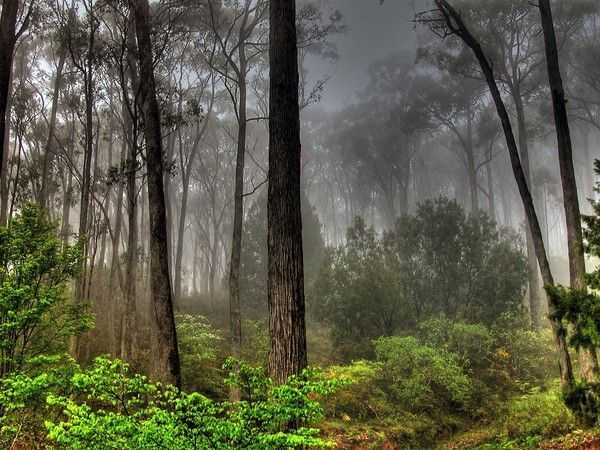 E n forêt