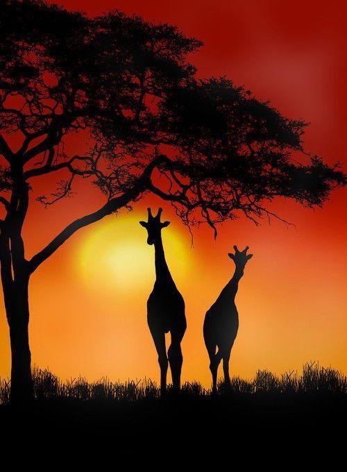 L'Afrique en image