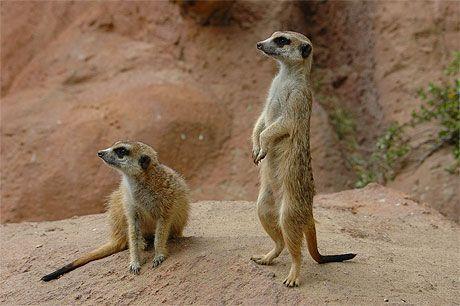Safari en afrique du sud page 8 - Animaux savane africaine ...