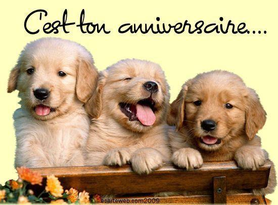 bonne anniversaire avec chien
