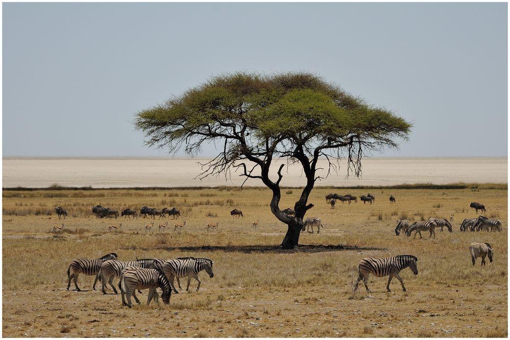 Afrique du sud page 4 - Dessin paysage africain ...
